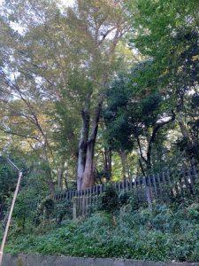 グリーンヴィラ代々木